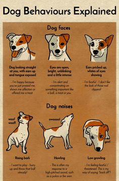Dog behavior explained