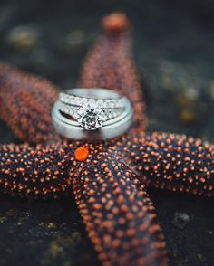 Wedding ring shot on a starfish. | Wedding by Charleston wedding photographers @billiejojeremy. | This starfish happened along at just the right moment during this day-after session at Folly Beach, SC! . . . #southernwedding #weddingring #charlestonbride #ringshot #destinationwedding #charlestonwedding #beach #starfish