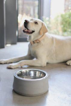 Benji Moon Concrete Pet Bowl Dogbowl Concrete Heavy Dogs Benjiandmoon Bowl Pet Bowls Pets Pet Shop