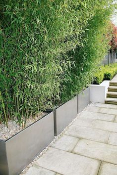 Bamboo Planters as Privacy Screen