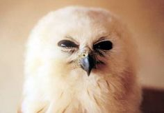 Disappointed Owl thinks your contribution to the wildlife fund could have been bigger......