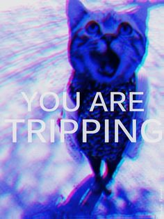 you are tripping