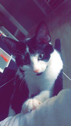 Cat kyoot (^v^)