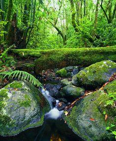 Parque Nacional Garajonay, isla de La Gomera