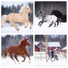 Vinterdagar vid ridskolan. Horses, Animals, Animales, Animaux, Animal, Animais, Horse