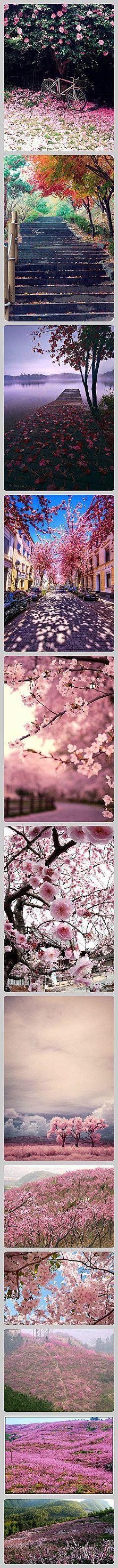 pink flower everywhere you turn