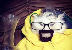 "And this cat. | 37 Jokes Only ""Breaking Bad"" Fans Will Understand"
