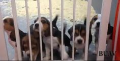 Sperimentazione sugli animali, cani e gatti uccisi per la ricerca (VIDEO)