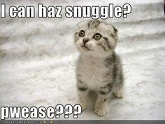 From my love to me! :) I can haz snuggle?  pwease???