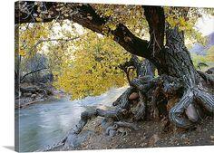 tree in stream - Google Search