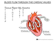 Blood Flow through the Cardiac Valves, from Nurse Lalaine. Lots of cool memory tricks on this nursing blog.