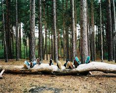 Voetjes in het bos