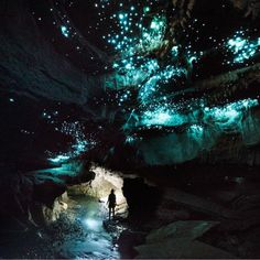 Glowing caves in New Zealand. The Waitomo Caves are lit up by a species of glow worm called Arachnocampa luminosa - exclusively found in this region Tumblr Wallpaper, Wallpaper Ideas, Lock Screen Wallpaper, Glow Worm Cave, Limestone Caves, Wallpaper Animes, Destinations, Fantasy Places, Landscape Photographers