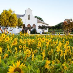 Enjoy a historic holiday at Bethulie Guest Farm. #TravelGround #Sunflower #Bethulie #Historic
