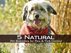 5 Natural Pet Remedies for Flea and Tick Control