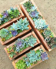 Succulent care - how easy is it to care for succulents? - Succulent care – how easy is it to care for succulents? You are in the right place about garden de - Succulent Gardening, Succulent Care, Succulent Terrarium, Container Gardening, Organic Gardening, Succulent Ideas, Terrarium Ideas, Succulent Boxes, Garden Planters