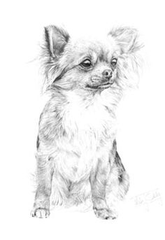 1000 images about how to draw animals on how