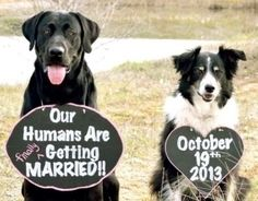 Ah, if only our cats were big enough, or tolerant enough, to get a picture with signs like these. A great Save-the-Date picture idea!