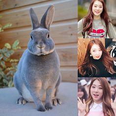 ChineseZodiac&KPOP // Rabbit // Yeonjung of CosmicGirls WJSN