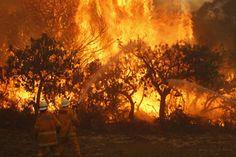 NSW Bush Fires. BLUE MOUNTAINS