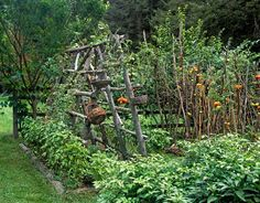 Twig fences and plant supports, what a wonderful way to use all those trees you must cut down for beautiful plant supports.