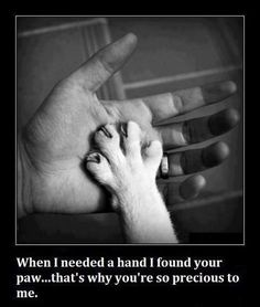 Paw in hand....I love my dogs...When Dixie had to be put down last year I never wanted another animal but when my neighbor told me Beans really needed a home I couldn't turn him away...then came Yogurt who was the only one of his litter to survive and would have died if I had not taken him. I don't know who saved who but I am grateful every day they let me be their human.