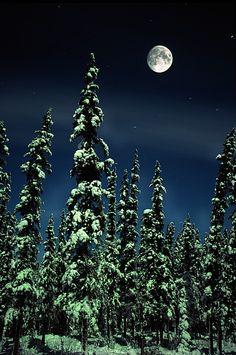 ~~Moon And Trees, Teslin, Yukon ~ winter in Canada by Robert Postma~~ Beautiful Moon, Beautiful World, Beautiful Places, Beautiful Pictures, Wonderful Places, Moon Stars, Winter Schnee, Winter Moon, Moonlight Sonata