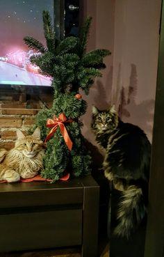 Cezar&Parys  MERRY CHRISTMAS