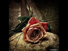Within Temptation- The Truth Beneath the Rose  Next Song I will learn!!!