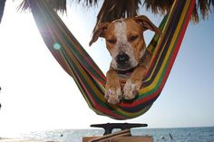 dog vacation - Google Search