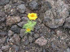 Fruit Of The Volcano https://madipix.com/fruit-of-the-volcano/