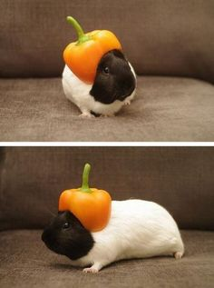 Hamster got stuck in a pepper!!!;)