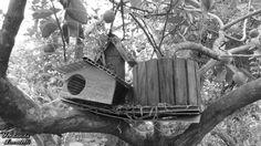 Pequena casa de pássaros - liberdade