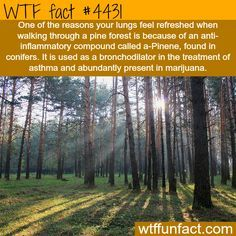 t - WTF fun facts