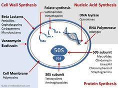 Antibiotics Mechanisms of action
