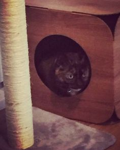 This beautiful little girl is Peggy  She is still asleep in her pod which has made us so happy!   #cat #catsofinstagram #cats_of_instagram #catfurnature #catfurniture #catsinboxes #cattoy #INSTACAT_MEOWS #cutecat #PurrMachine #catsinboxes #catbox #Excellent_Cats #BestMeow #dailykittymail #thecatniptimes #catcube #catpod #ArchNemesis #FlyingArchNemesis #myindoorpaws #ififitsisits #cutecatcrew #catchalet #catnip #themeowdaily #kitty #catpyramid #miuandmaosfurriends
