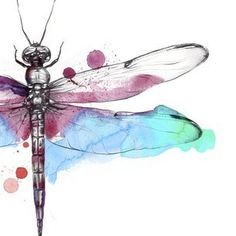 Watercolor Dragonfly By Esra Roise
