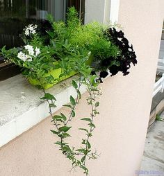 sangle jardiniere balcon bacsac 1 garde corps pinterest. Black Bedroom Furniture Sets. Home Design Ideas