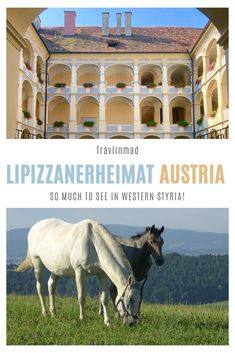 Lipizzanerheimat and the Piber Stud Farm in western Styria, Austria, are an easy day trip from nearby Graz. The breeding farm is home to the famous Lipizzaner horses in Piber, and St. Barbara Church in Bärnbach and Therme NOVA Spa are must-visits! Spain Travel, Italy Travel, Croatia Travel, European Destination, European Travel, Travel Tips For Europe, Travel Abroad, Stud Farm, Florida Travel