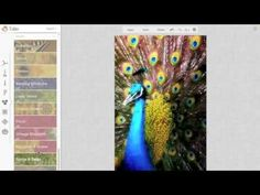 PicMonkey Tutorial: Free Photo Editing for Writers - YouTube