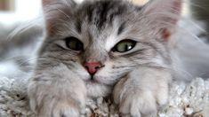 ANIMALS TIME : Cats time (hora de gatos)
