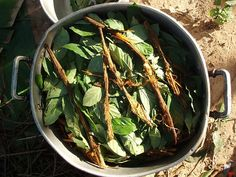 This Is How Ayahuasca Affects the Brain  | Motherboard