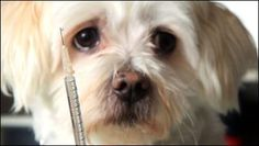 Biology and Symptoms of Diabetes in Dogs