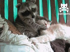 Cats GIF