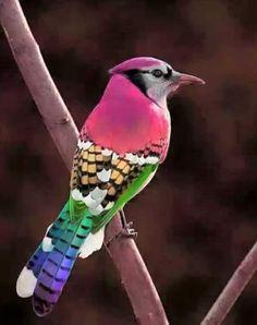 Foto de un precioso pajaro descargar gratis