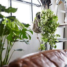 ブルックリンスタイル 観葉植物とインテリア - パーカーズ オンラインストア