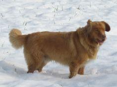 Um cachorro marrom na neve. Corgi, Animals, Brown, Snow, Diy Dog, Photos, Animaux, Corgis, Animal