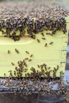 Attleboro Massachusetts, North Attleboro, Bee Company, Honey Bee Hives, Bee Boxes, Backyard Beekeeping, Wild Honey, After The Storm, Willow Tree