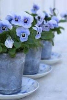 Mooie combinatie: viooltjes, zink, oud bordje