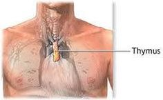 For overall body electrical imbalance, put a couple of drops of oils in each palm, hold the right palm over the navel and left palm over the thymus (see pic above) and take three slow, deep breaths.   Place the dominant hand over the navel and the other hand over the thymus and rub clockwise three times. This works through the body's electrical field by pulling the frequency in through the unbilicus, the thymus, and the olfactory to the limbic system in the brain to create electrical…